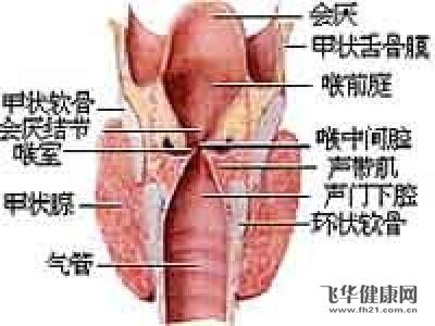 喉咙骨头结构图