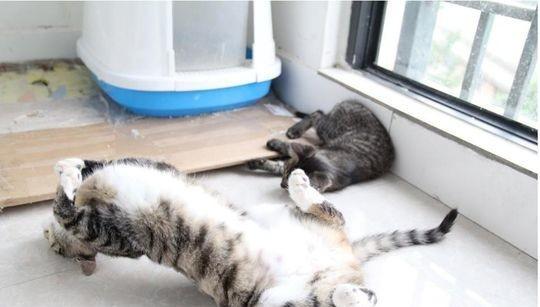 我有特殊的睡觉姿势