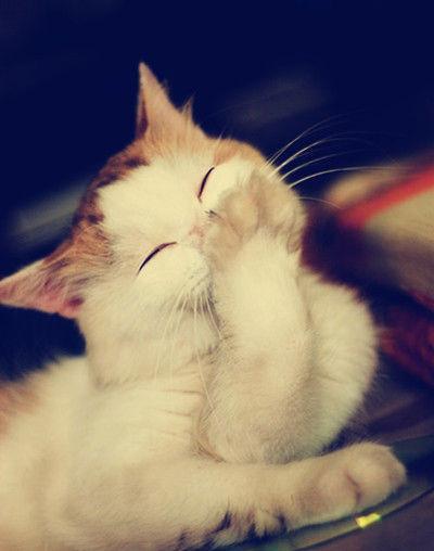 可爱的小猫 偷笑