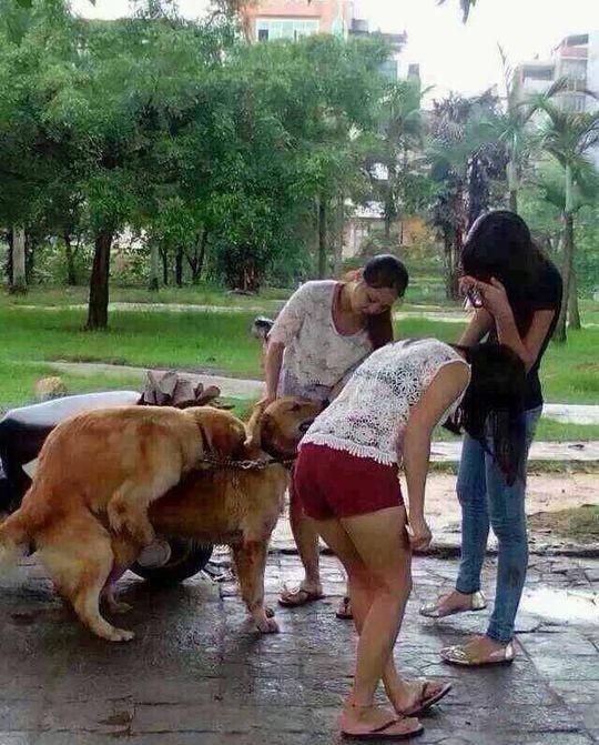 动物内涵图片大全图片