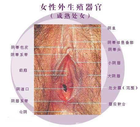 子宫粘膜结构示意图