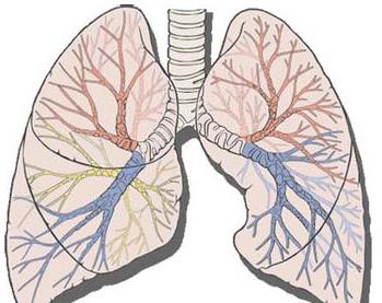 衣原体肺炎症状有哪些