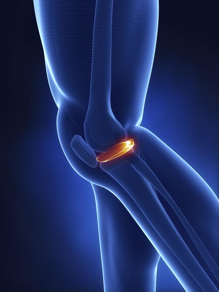 膝盖关节图片结构图