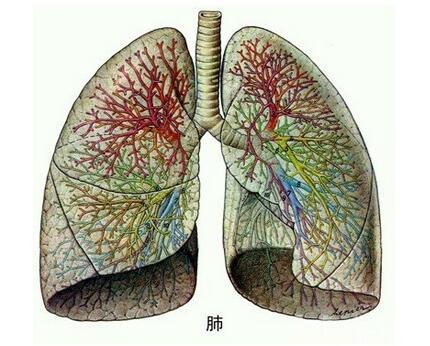 慢阻肺會不會傳染