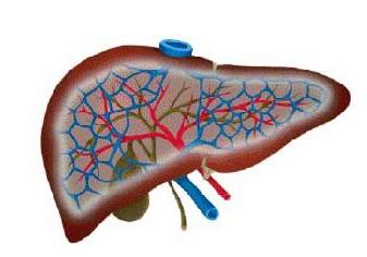什么是自体免疫性肝炎