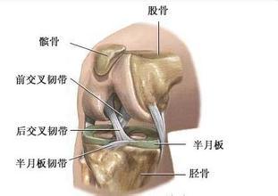 膝关节检查方法