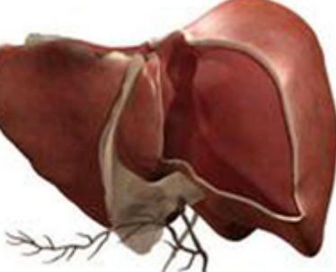 重型肝炎有什么症状呢