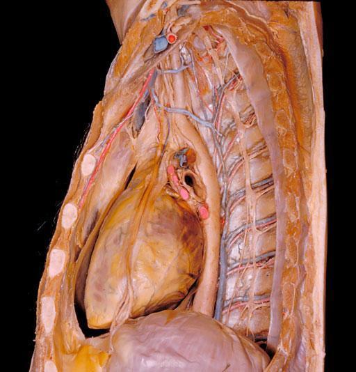慢性肾盂肾炎症状都有哪些
