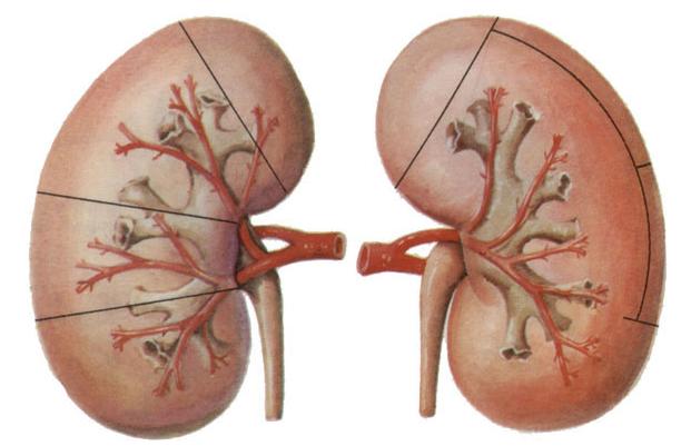 慢性肾炎尿液检查特点