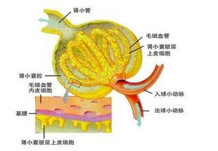 遗传性肾盂肾炎病因有哪些