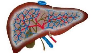 什么是中毒性肝炎