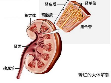 急性肾盂肾炎症状