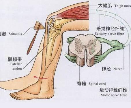 治疗风湿性膝关节炎偏方有哪些呢