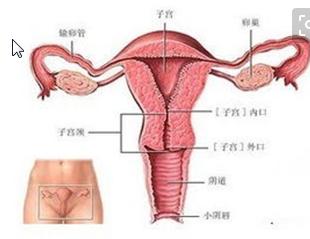 最健康的陰道炎的飲食治療方法