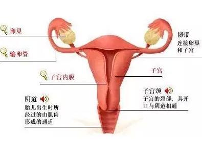 孕期霉菌性阴炎对胎儿_霉菌性阴炎怎么根治