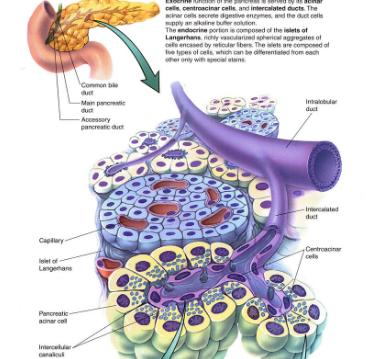胰腺癌如何传染呢
