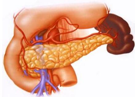 胰腺癌乏力嗜睡怎么办
