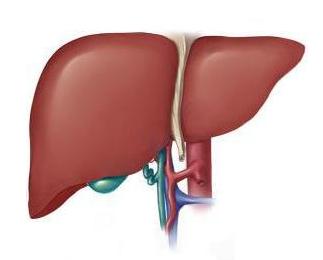 患有大肝癌的原因