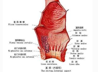 直肠癌的早期症状有哪些