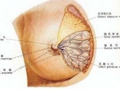 乳腺癌后遗症手肿是怎么回事