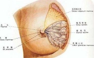 乳腺癌免疫疗法费用