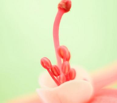 如何看懂乳腺癌常见免疫组化指标
