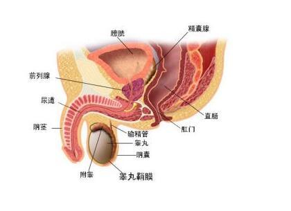 膀胱癌术后吃什么好呢