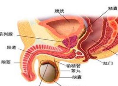 前列腺癌要多运动吗