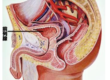 前列腺癌能生育吗