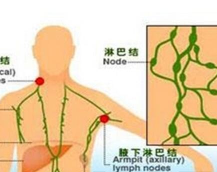 颈、锁骨上下、滑车上、骼窝、腹股沟、帼窝淋巴结,咽淋巴环等,在