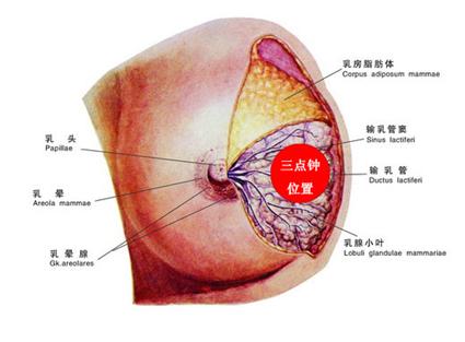 患有乳腺癌遺傳嗎
