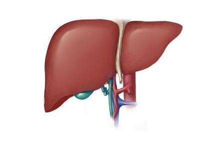 乙肝疫苗可以预防肝癌晚期吗
