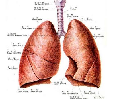 肝细胞性肝癌的病因有哪些呢