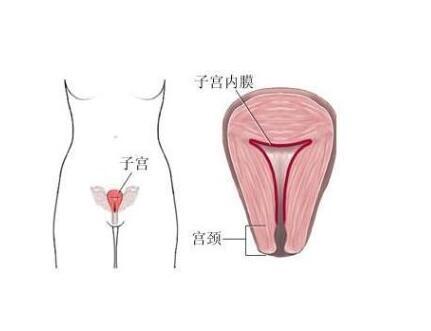 西医院能治功能性子宫出血吗