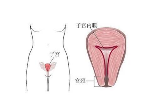 功能性子宫出血的生活护理