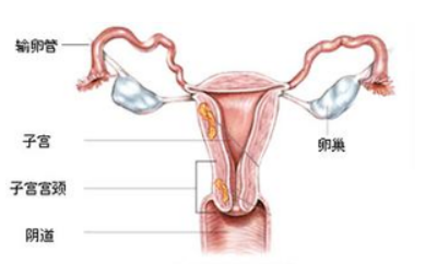 拔罐能止功能性子宫出血吗
