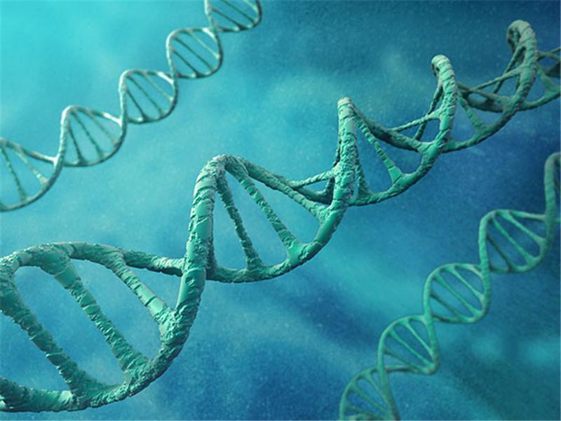 肺动脉高压会遗传给后代吗