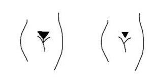 成人视频阴毛系列_(4)碟型:阴毛呈横生到股关节   (5)正三角型: 看两性套图,聊成人