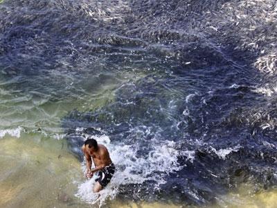 海边游泳看到黑呼呼一片顿时傻眼