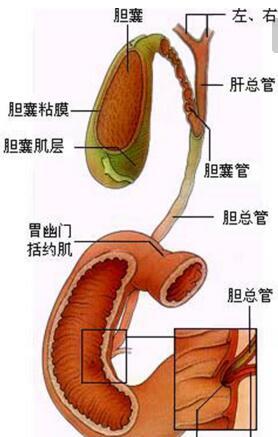 膽管癌用什么中藥才能治好