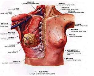 乳腺癌肺转移怎么治疗