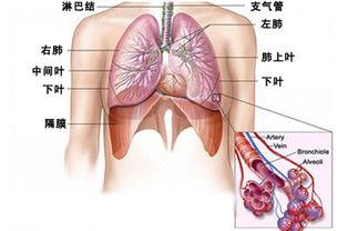 治支氣管炎中藥方