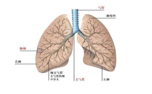慢阻肺患者的一般住院流程是怎样的