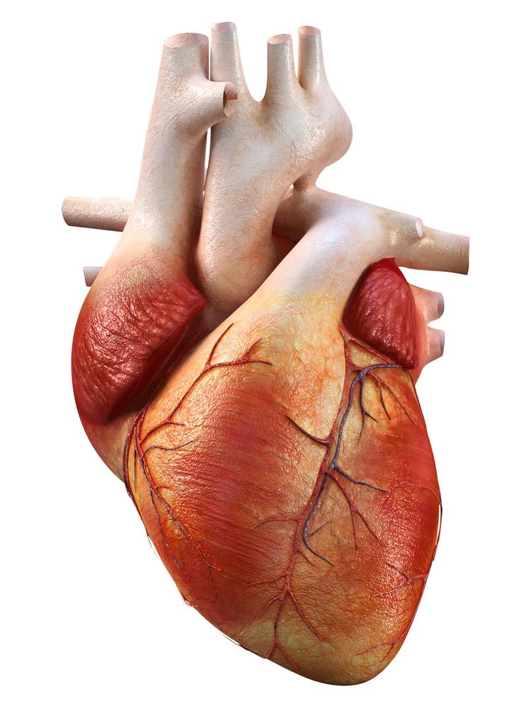 红斑狼疮对心脏的危害表现