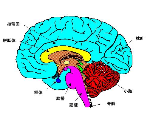 脑瘫会不会遗传给后代