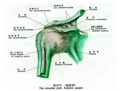 肩周炎的症状表现