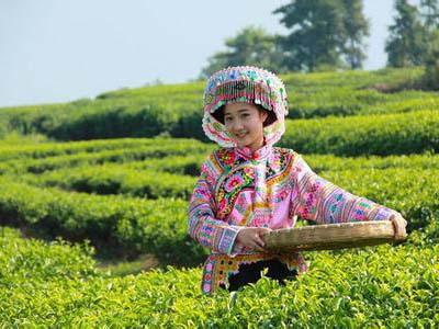 南方习俗喝谷雨茶清肝明目
