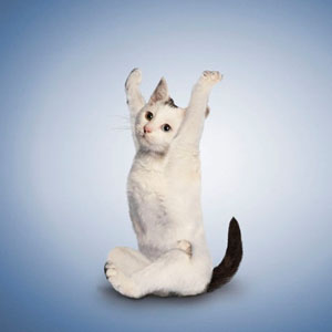 让我们跟着可爱小动物一起来练yoga吧!