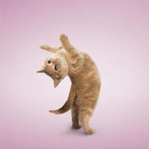萌翻了的猫猫狗狗减肥瑜伽秀