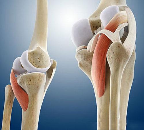 膝盖3D结构解剖图